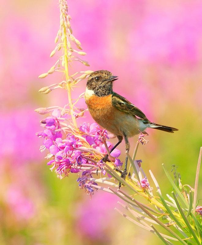 Цвет лета - Влад