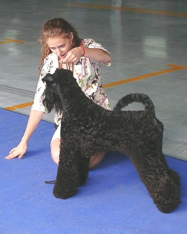 Выставка собак 11.09.16 - Асылбек Айманов
