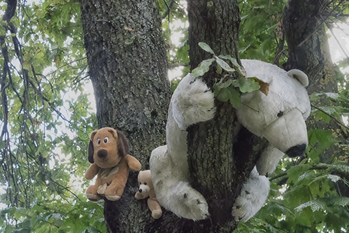 Мишки на дереве - Евгений