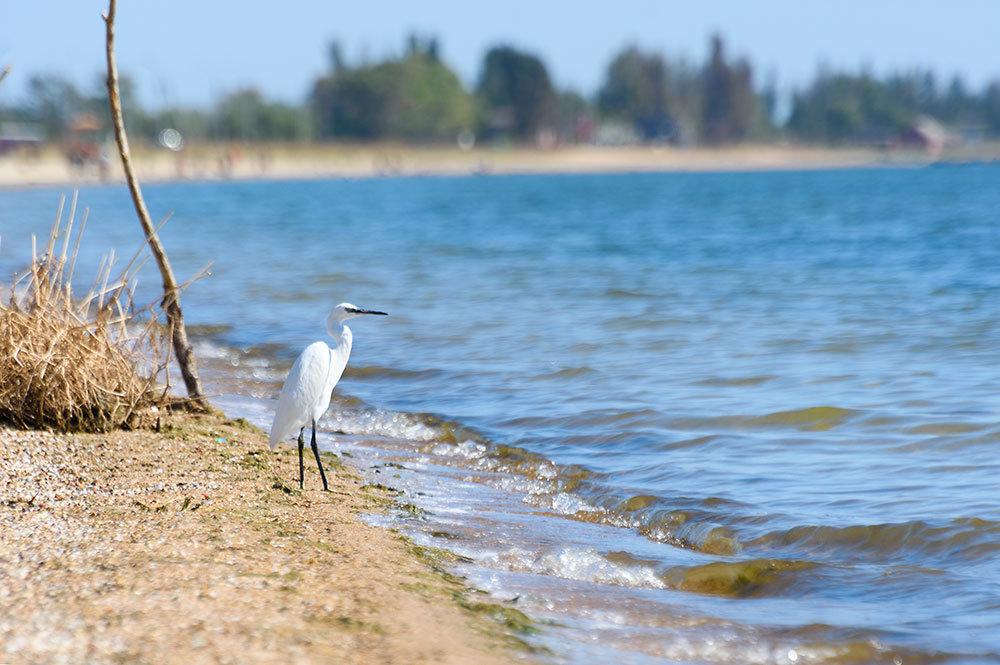 цапля на берегу моря - Iryna K