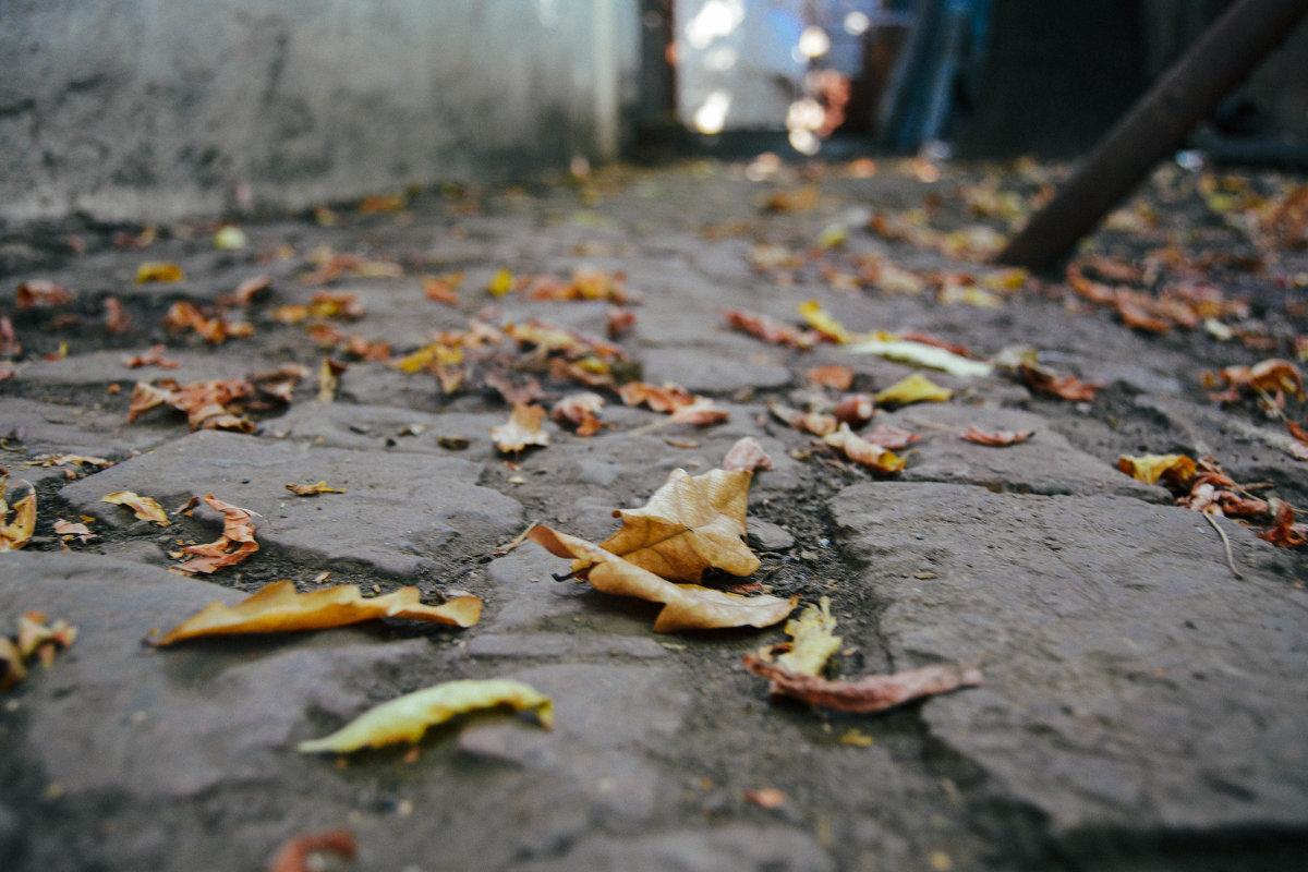 дорога усыпана листьями дуба - Света Кондрашова