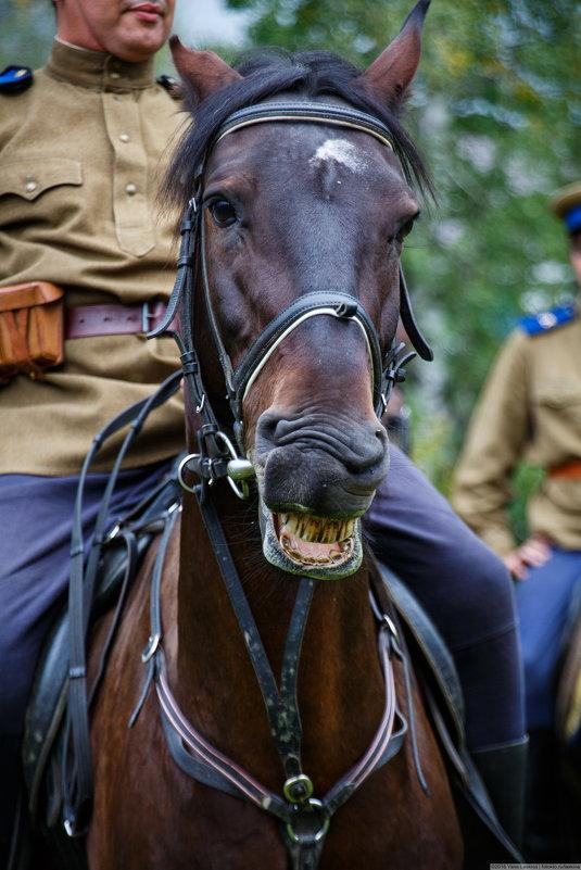 конный театр - Y Laskina
