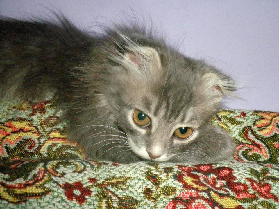 Взрослеющая кошка - Наталия Каминская