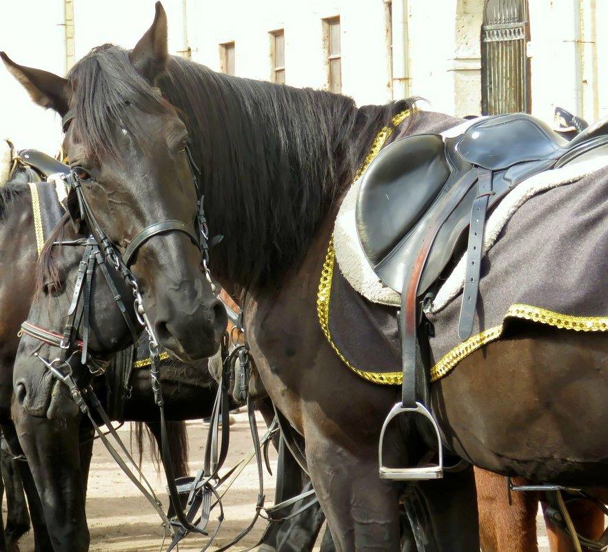 Конь вороной - Валерия Яскович