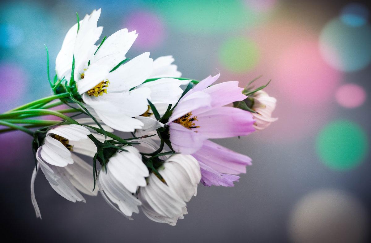 цветочки - Марина Романова
