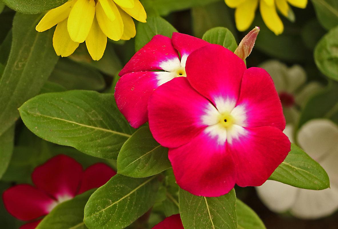 Цветочки - Светлана