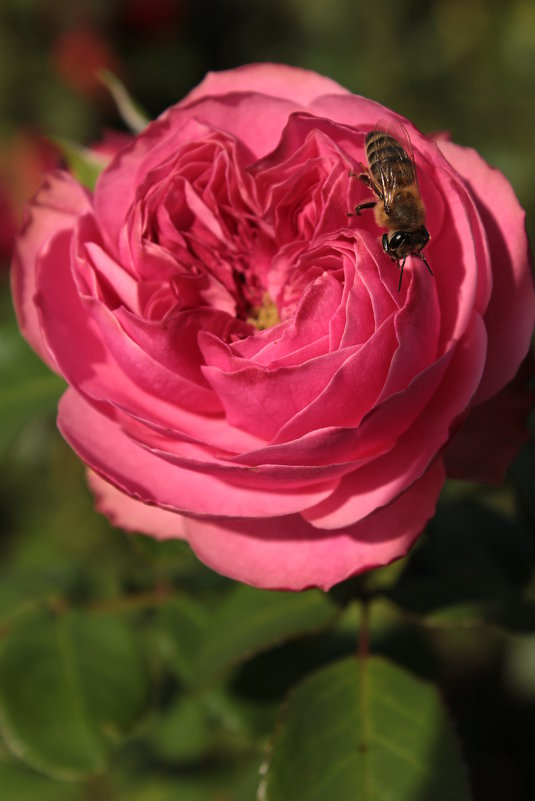 Пчелка - Анна Шишалова