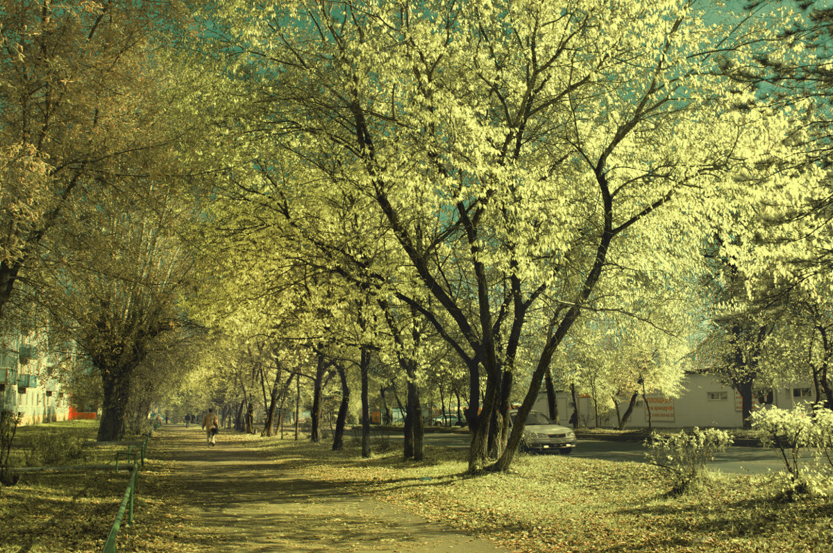 Золотая осень! - Сибирь Эвенкия Евгений Щербаков