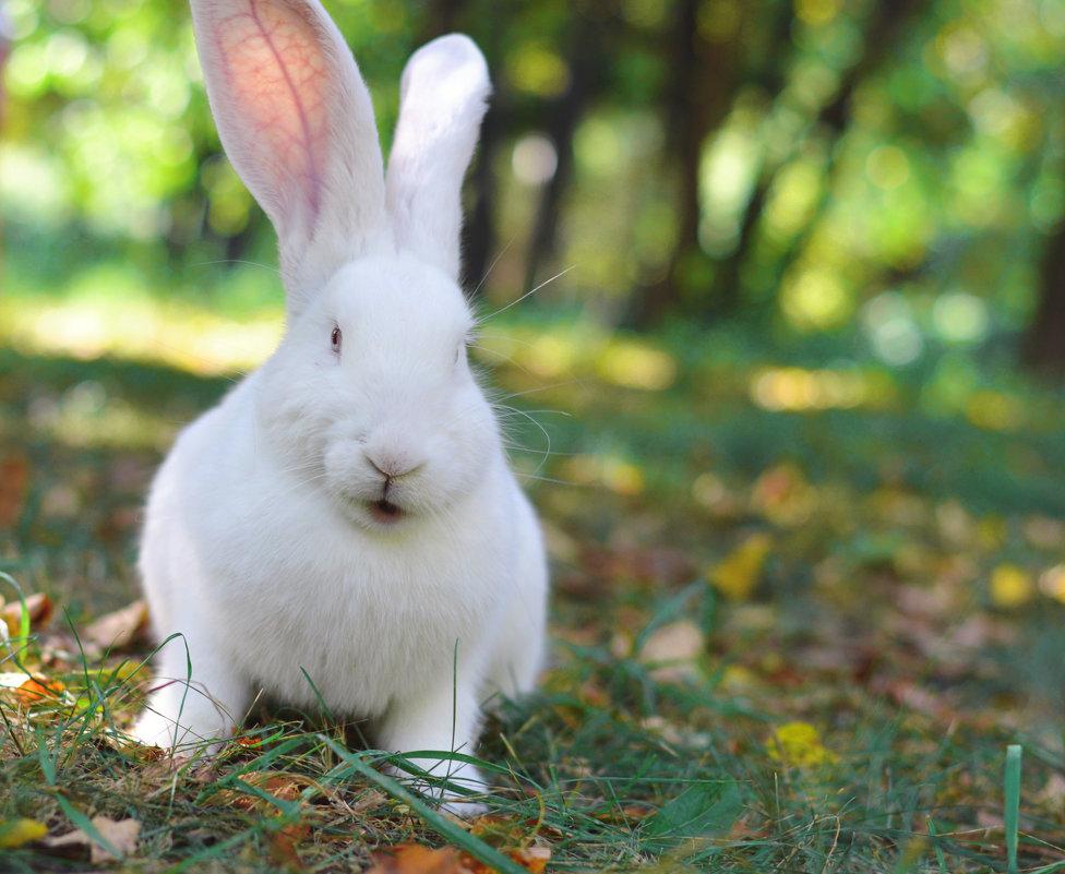 Кролик Снегурочка - Ирина