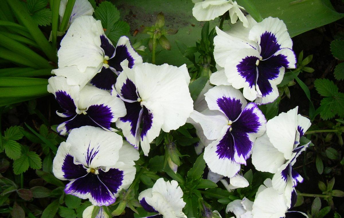 Цветы,словно бабочки! - татьяна