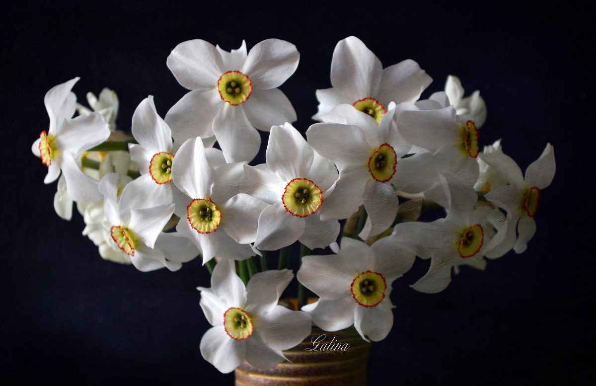 Есть глаза у цветов - Галина Galyazlatotsvet
