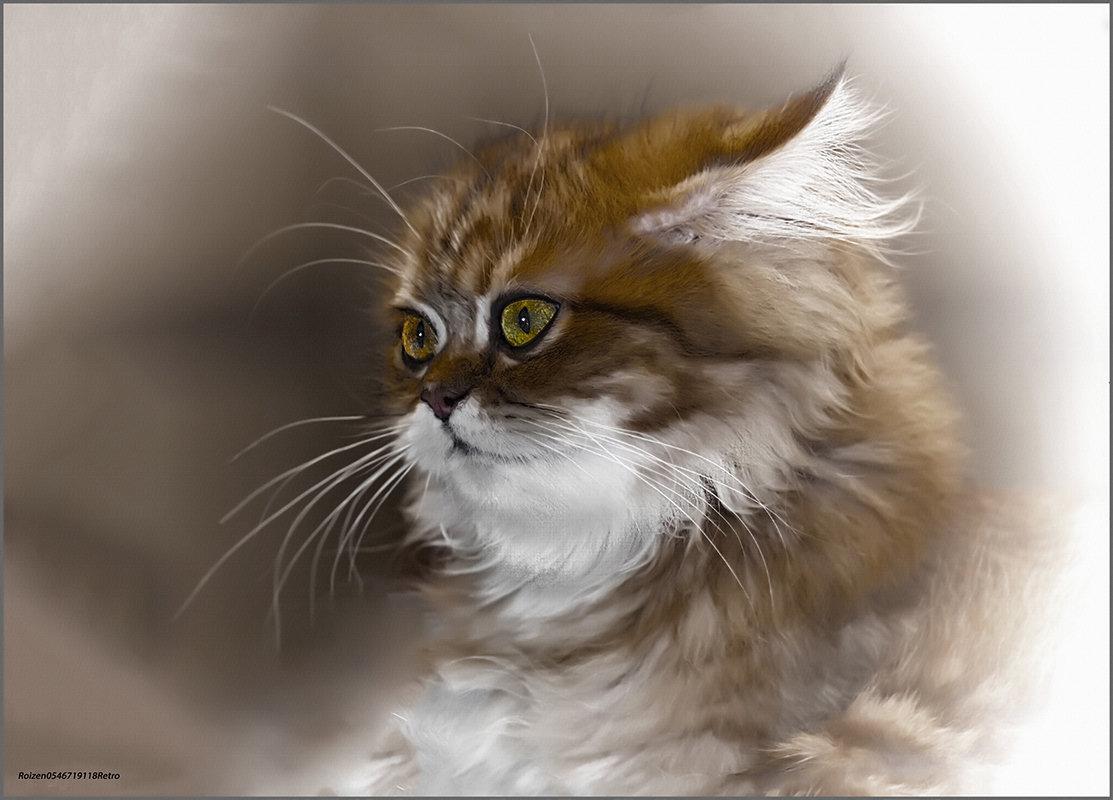 Шиншилла-2-из серии Кошки очарование мое! - Shmual Hava Retro