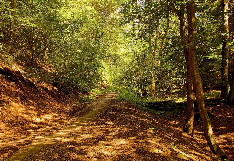 По лесной дороге - Alexander