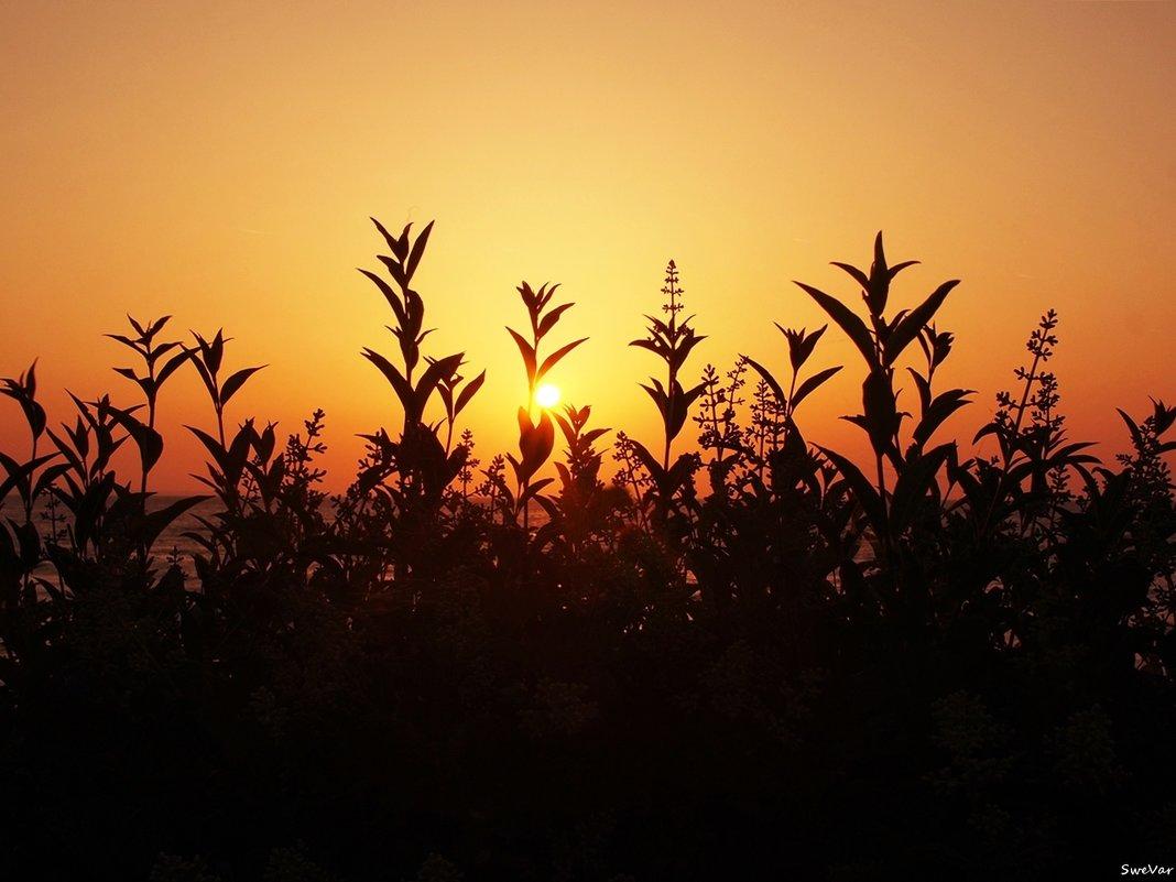 Восход в теплых тонах - Swetlana V