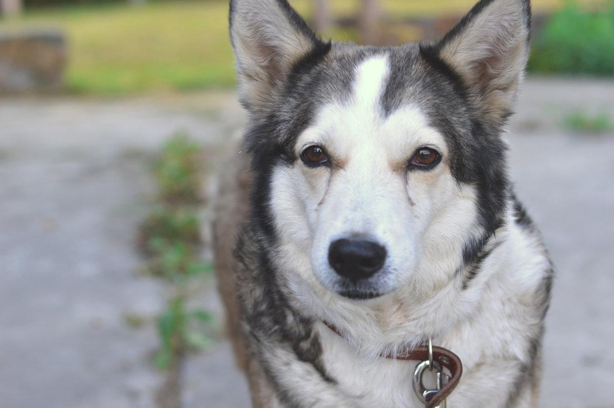 Собачья жизнь - Ирина