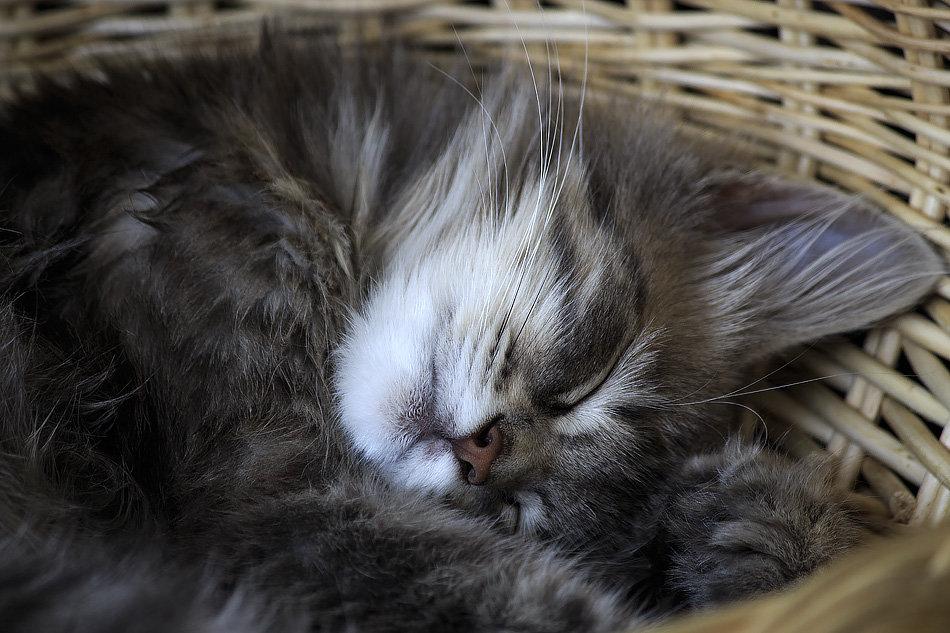 Спящий комочек счастья - Ирина Приходько