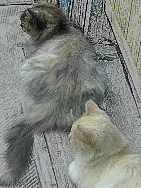 коты - Юлия Денискина