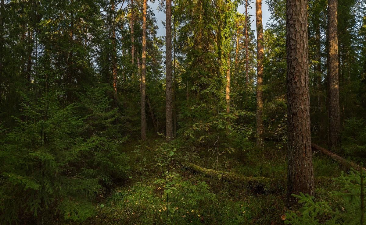 Лесной пейзаж - Фёдор. Лашков