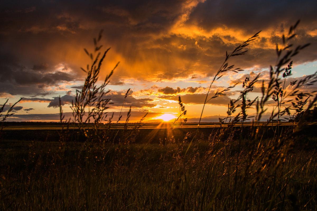 Закат на поле - Сергей Могучёв