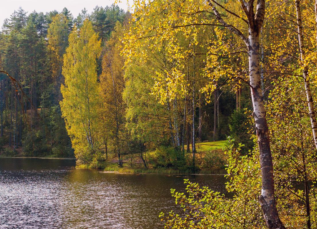 Осень на лесном озере 4 - Виталий