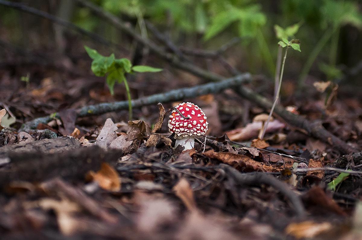 ...в лесу... - Андрей Гр