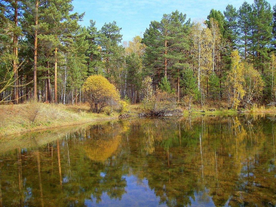 Маленькое лесное озеро - alemigun