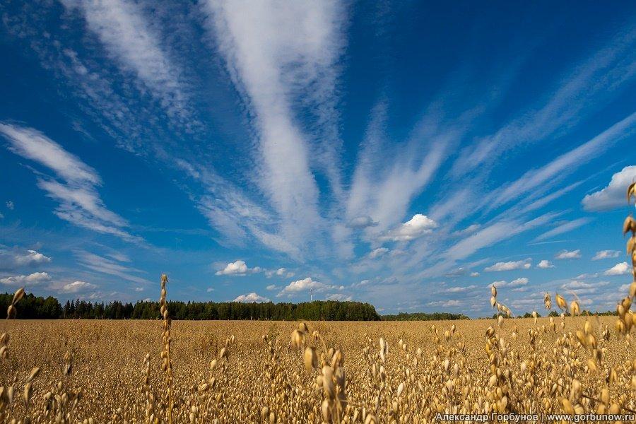Безмятежный пейзаж - Александр Горбунов