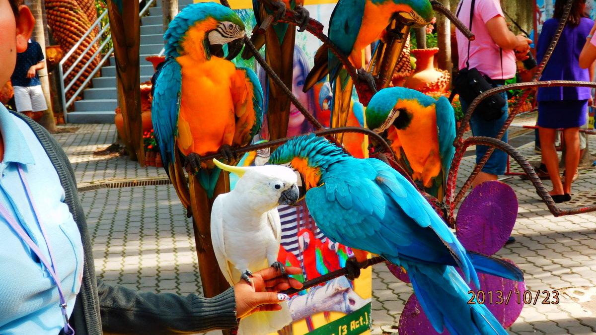 разноцветные попугаи - Таня