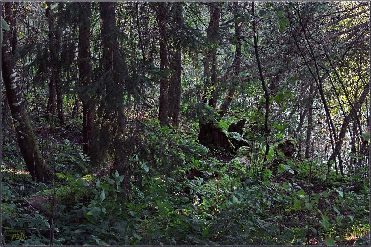 """""""А лес стоит загадочный..!"""" - Роланд Дубровский"""