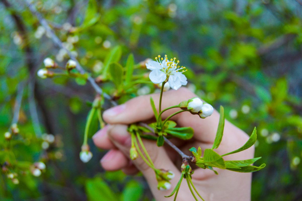 Веточка весны в прошлом - Света Кондрашова