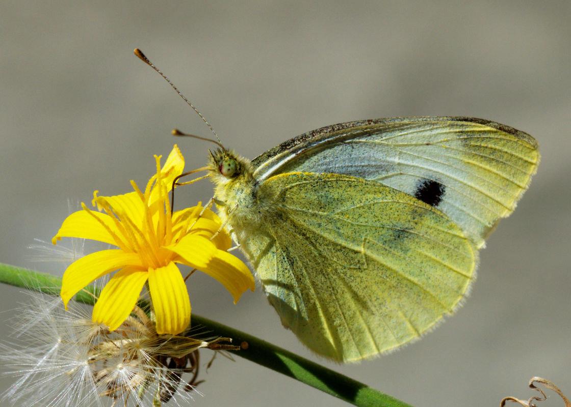 Вот и бабочка опять - Алексей Глебов