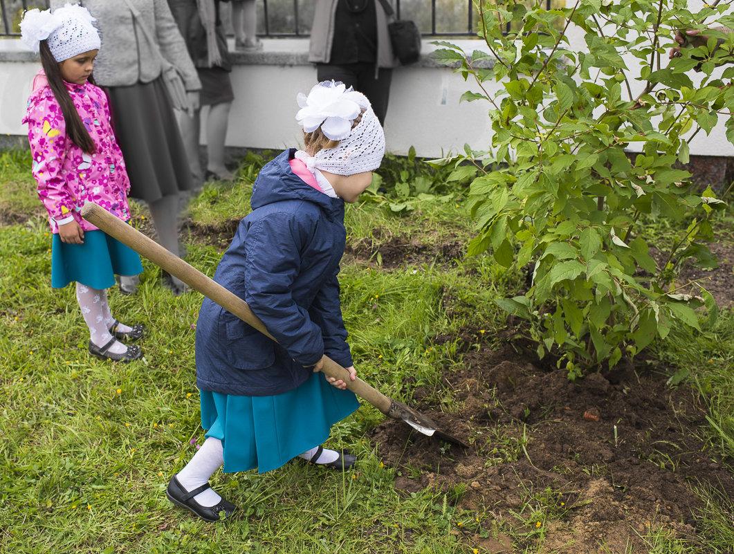 Начнем жизнь с посадки дерева!!!. - Анатолий Бахтин
