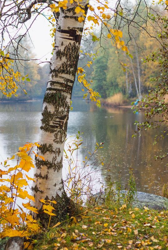Осень в старом парке 3 - Виталий