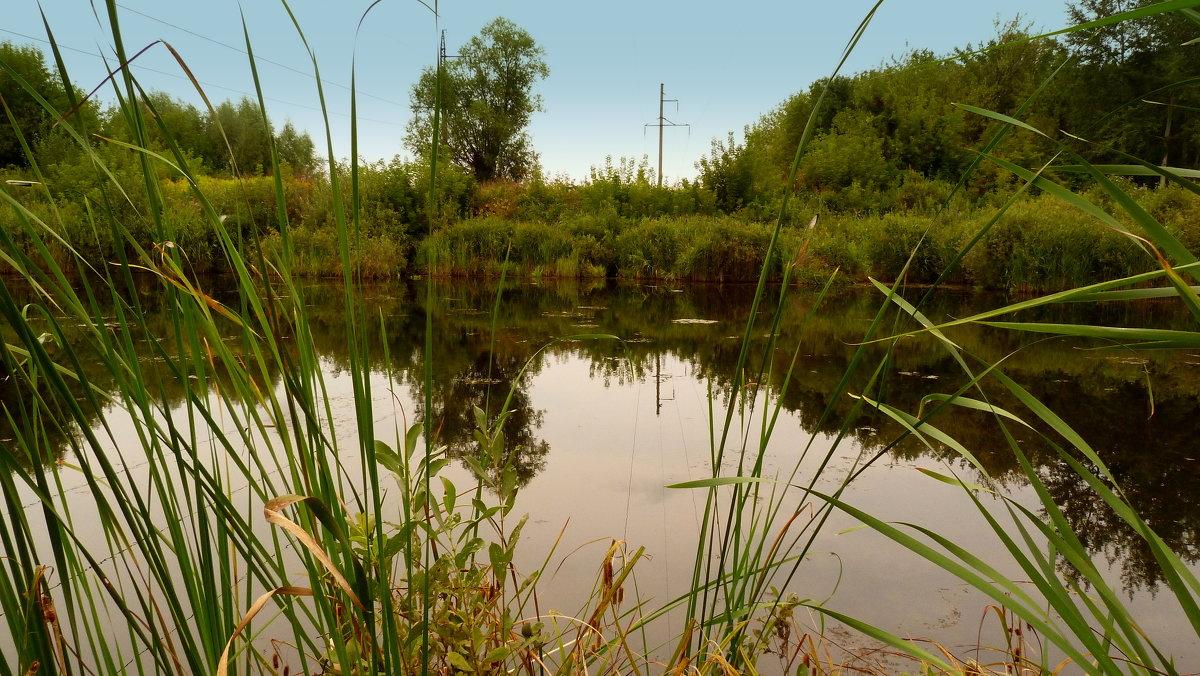озеро под ЛЭП - Александр Прокудин
