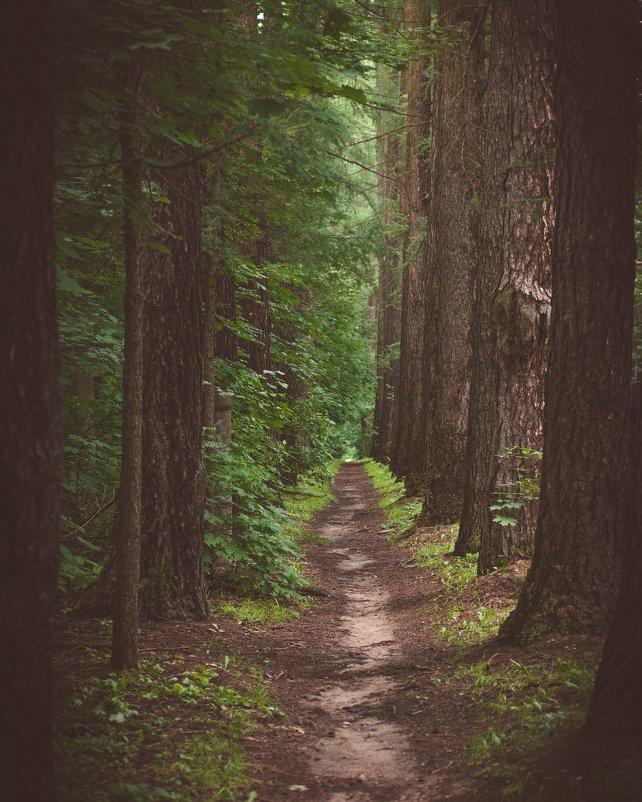 Улицы старого леса - Александр Колесников
