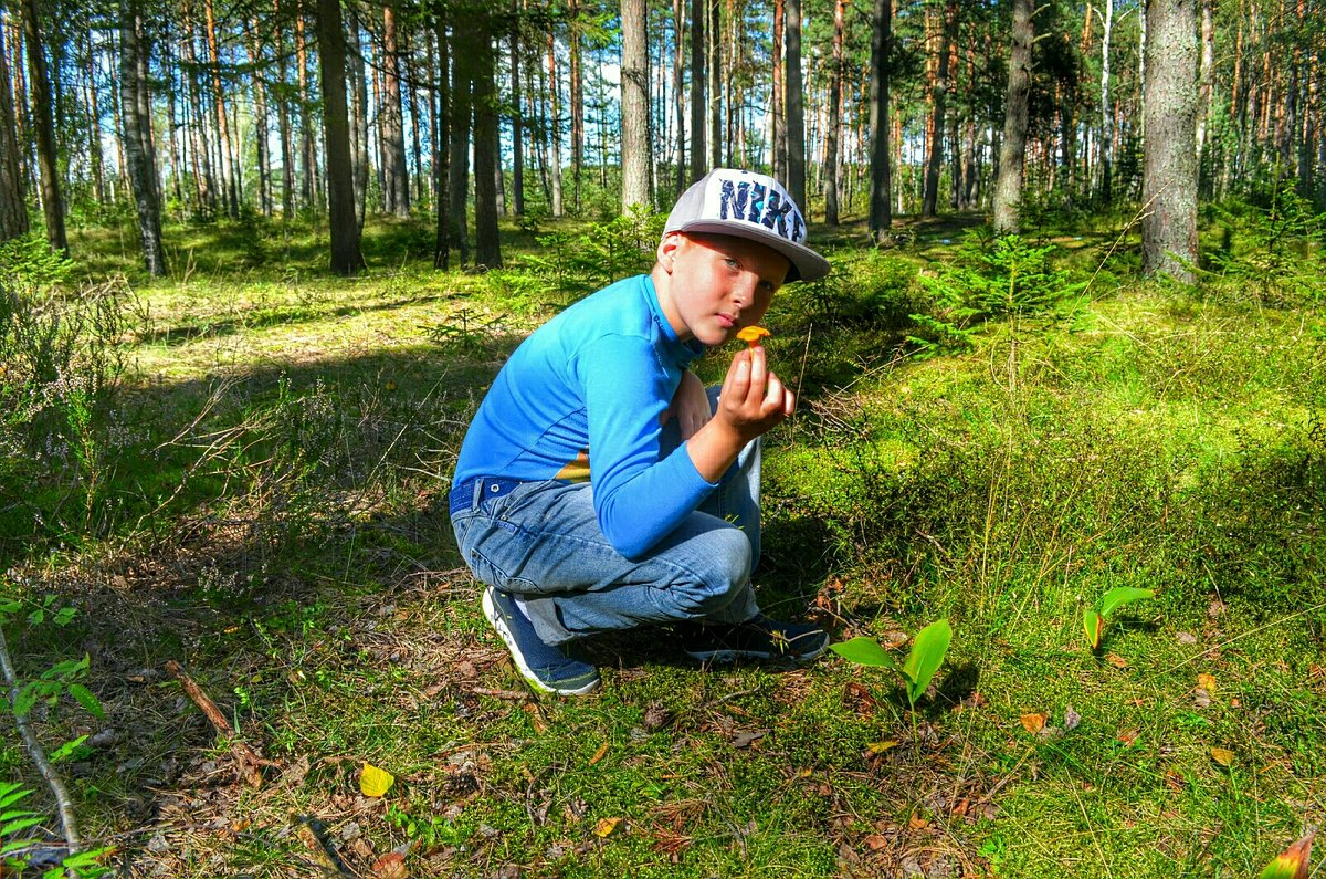 Внук в походе за грибами - Милешкин Владимир Алексеевич