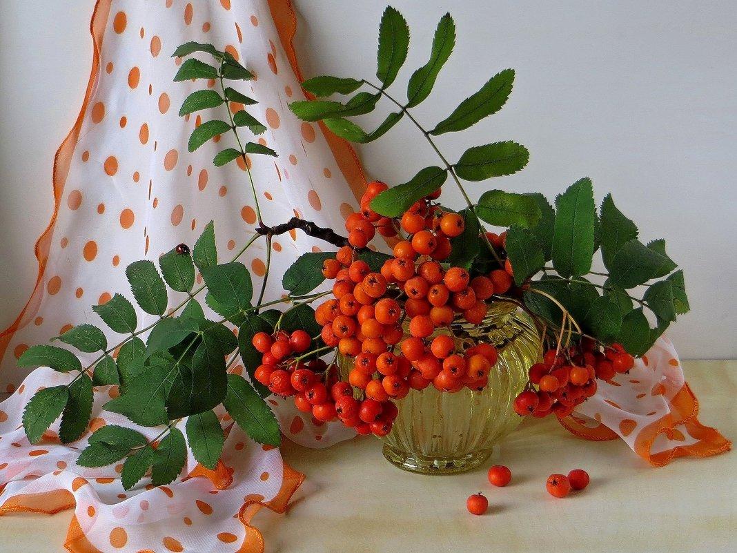 Ах, ягоды осенние, красивы, но горьки... - Татьяна Смоляниченко