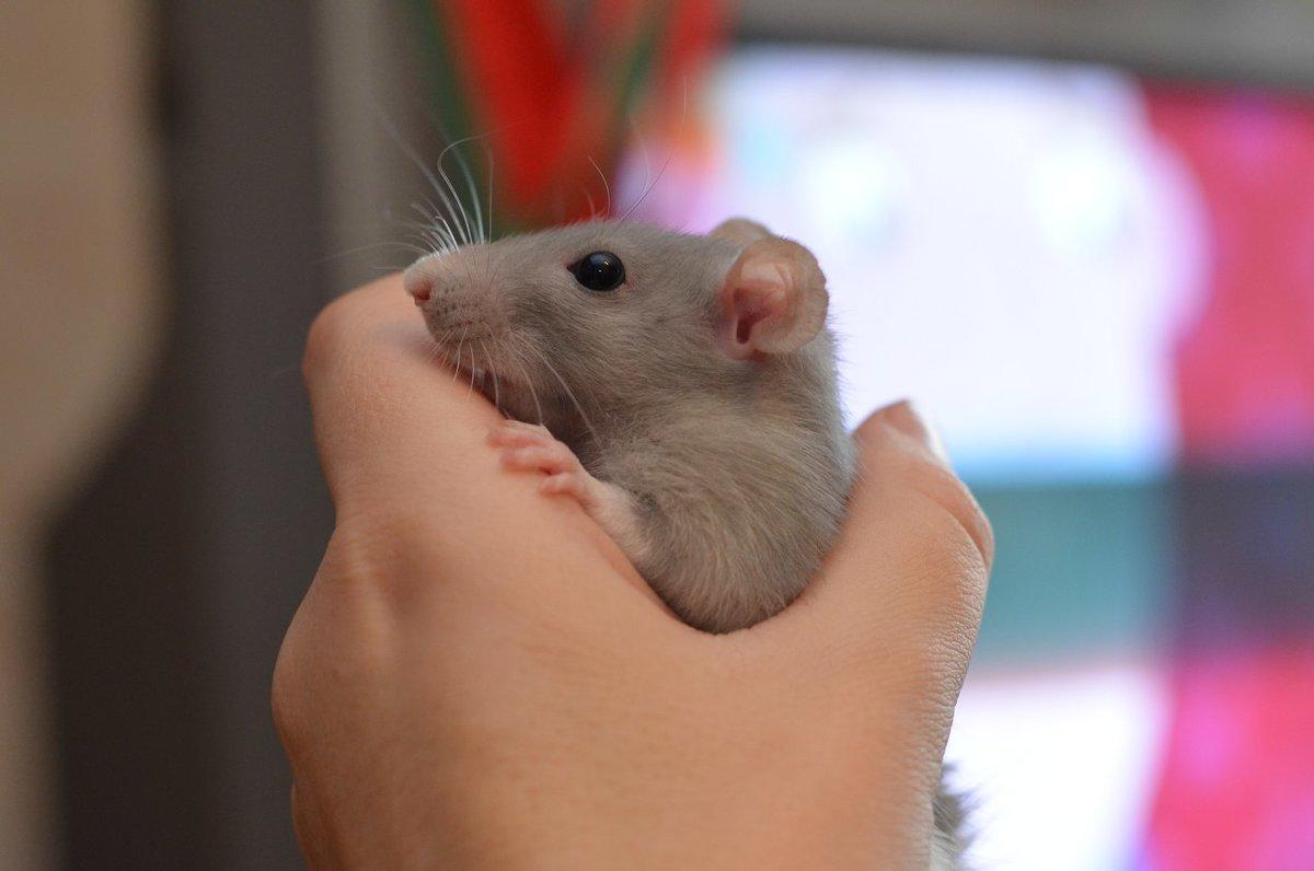 Мышонок Жора - Марина Романова