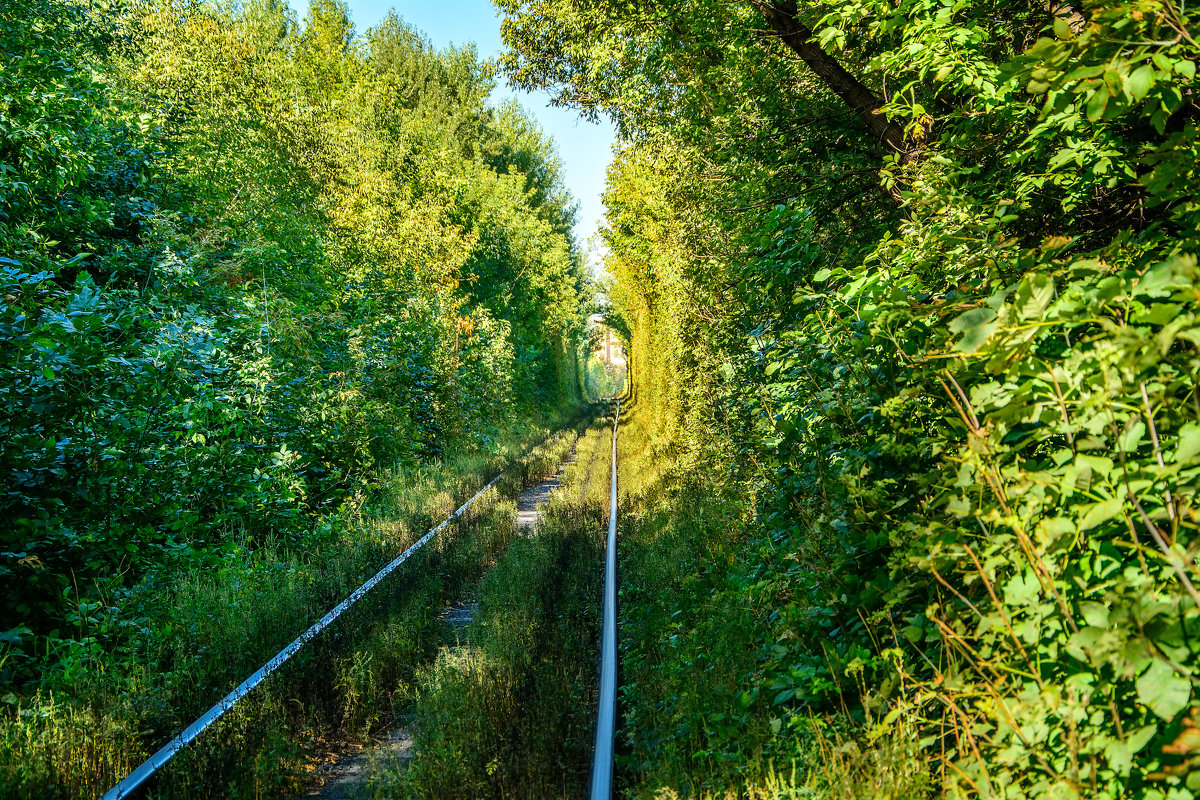 Зеленый тоннель - Юрий Шапошник
