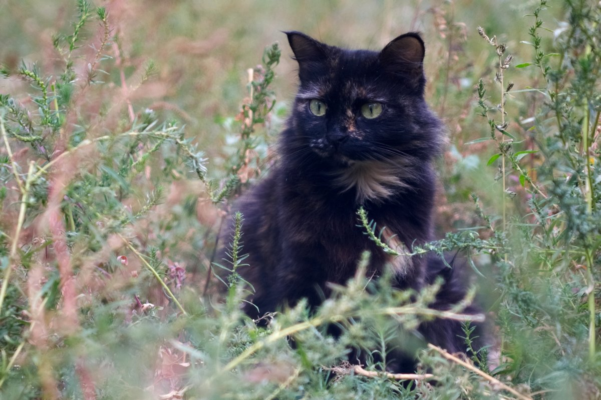 серьезная кошка - Дмитрий Барабанщиков