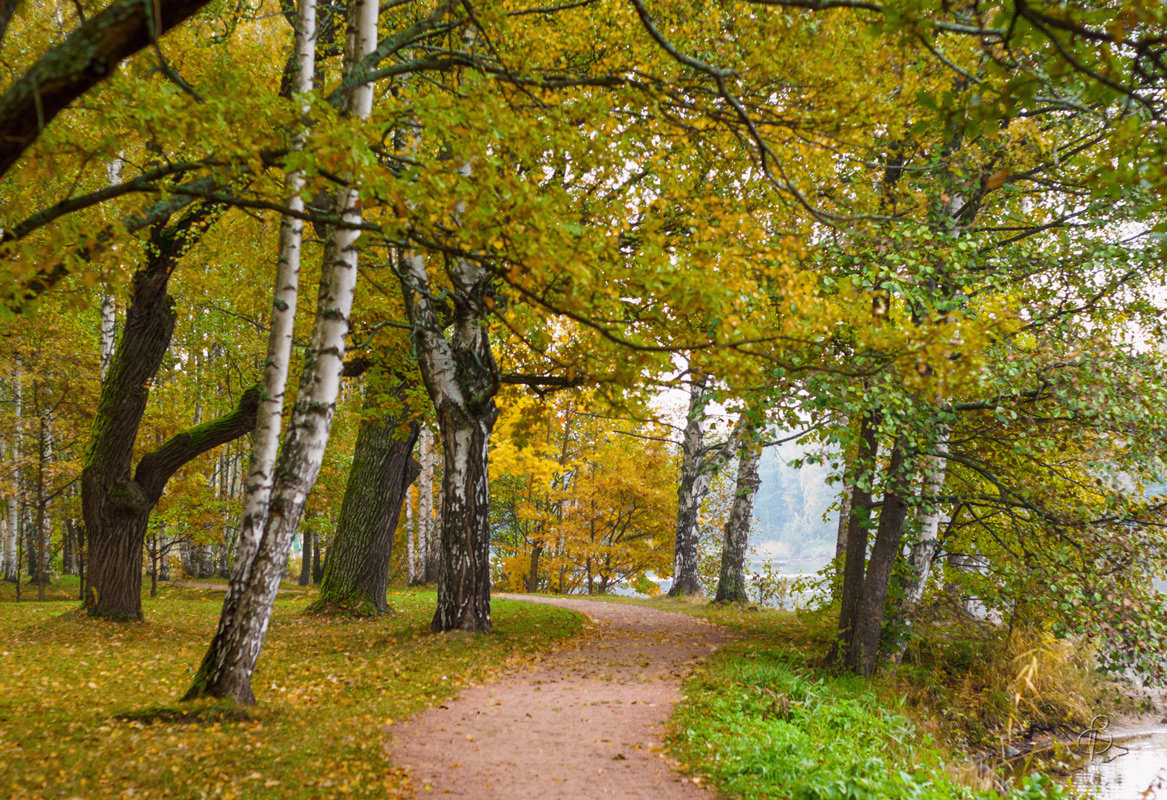 Осень в старом парке 4 - Виталий