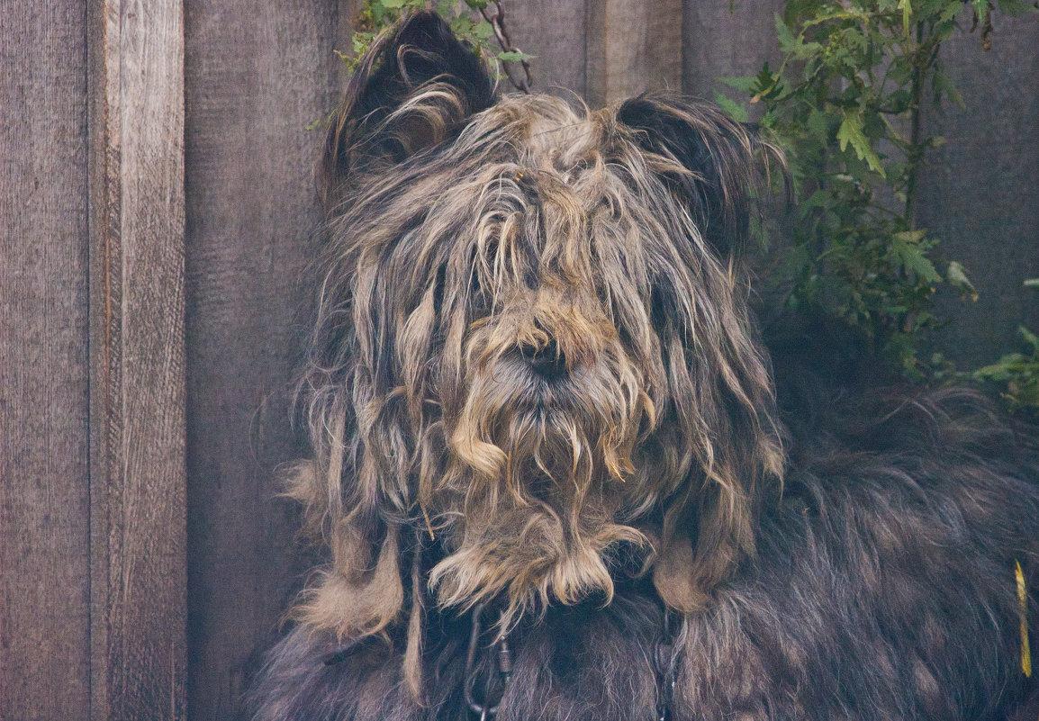 Пёс - Евгений