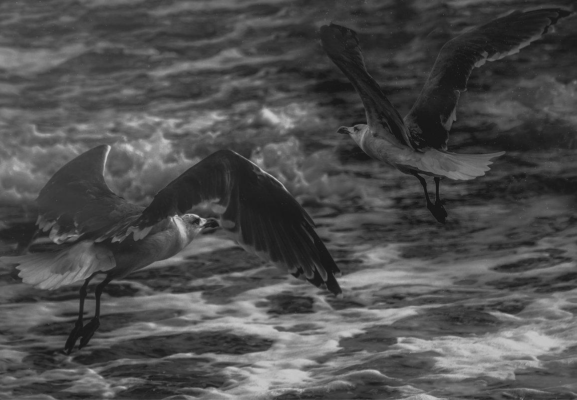 Чайки и море...Одесское побережье! - Александр Вивчарик