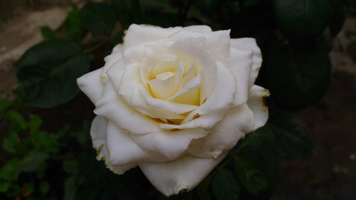 Чистота души - Настасья Чейз