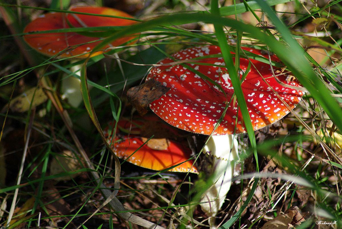 Грибки-грибочки - Виктор Х.