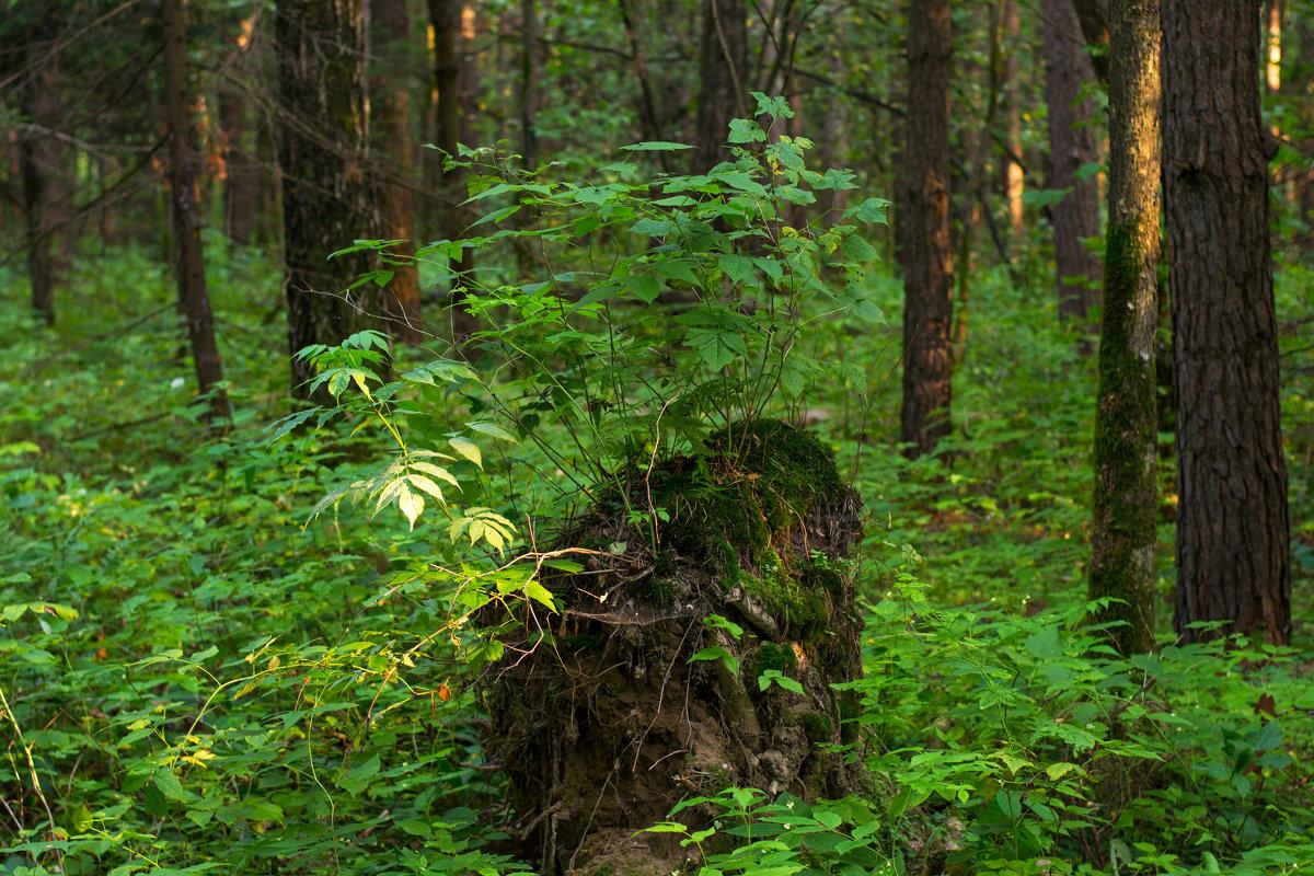 В лесу. - Владимир Лазарев