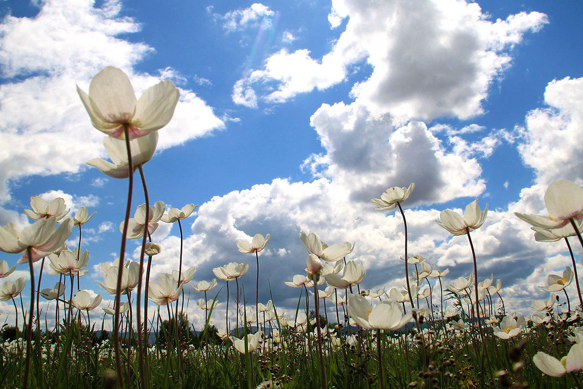 Ветреница в лугах цветет - Екатерина Торганская