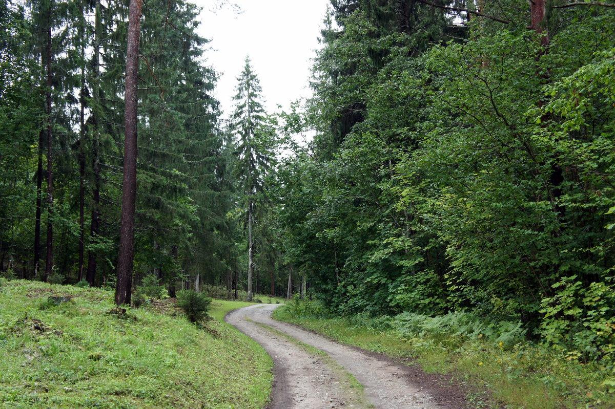 Дорога вокруг Пюхтицкого женского монастыря - Елена Павлова (Смолова)