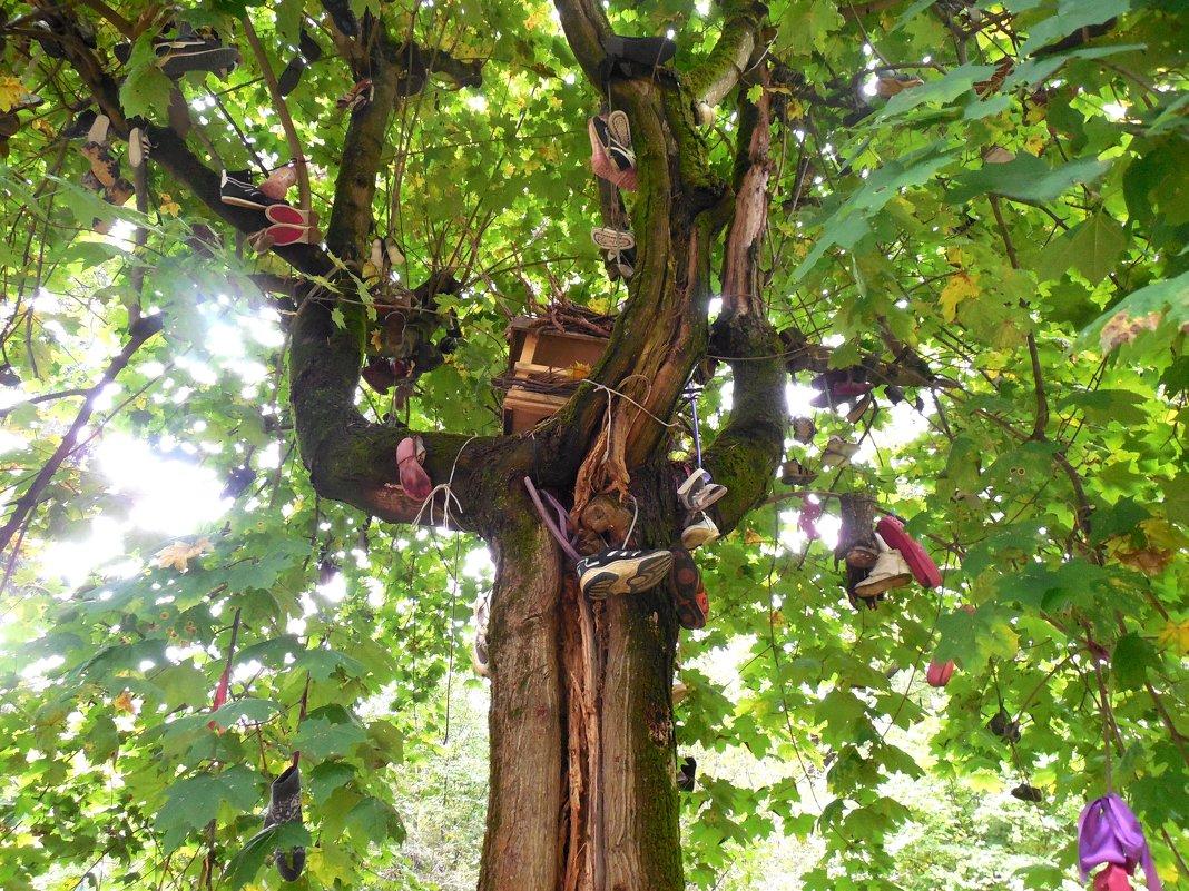 Чудо - дерево - Мила
