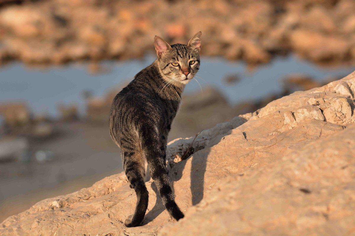 Морской кот. - Leonid Korenfeld
